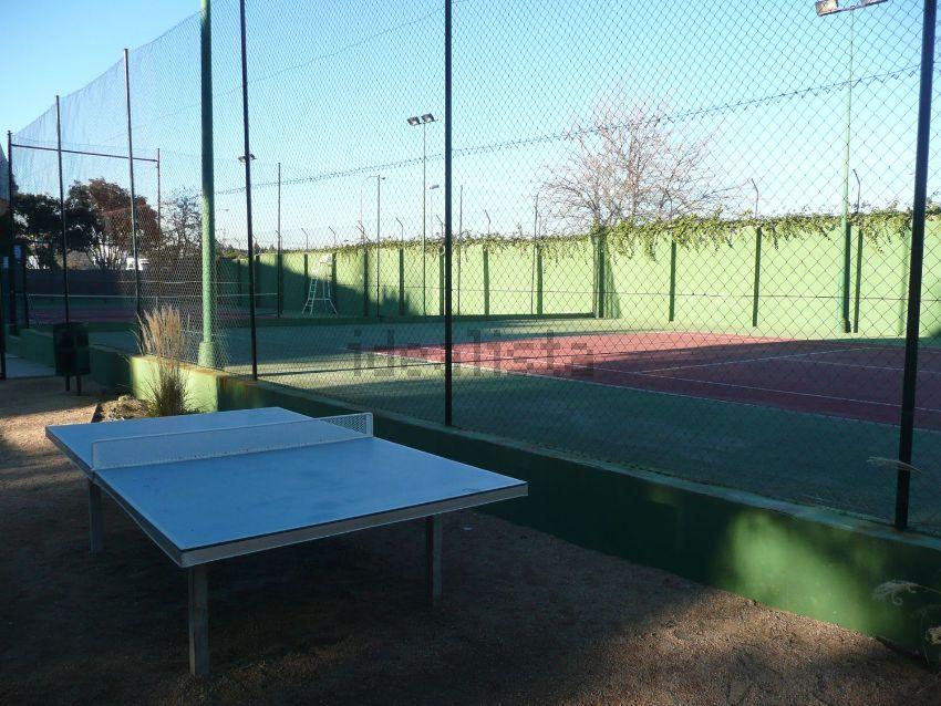 ホームステイ テニス